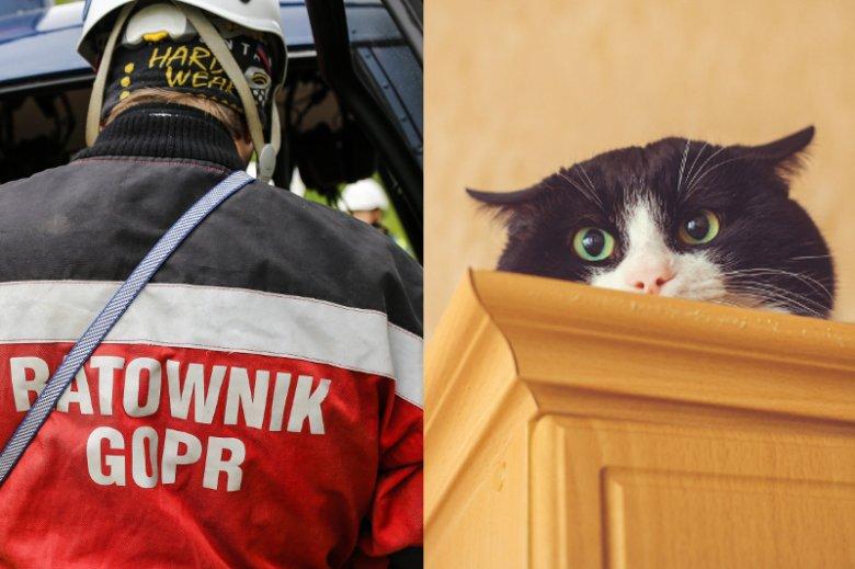 Ratownik od 4 godzin próbuje przekonać kota, że pomoże mu zejść z szafy.